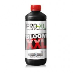 Bloom XXL